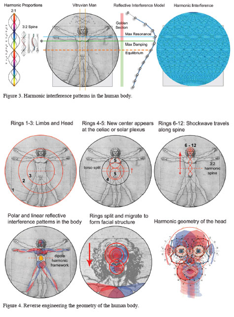 Harmonic Patterns in Humans