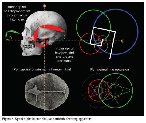 Spiral of Human Skull