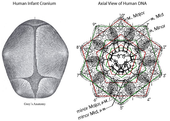 DNA Harmonics Patterns