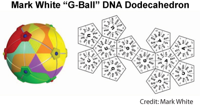 DNA Dodecahedron