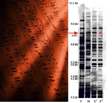 DNA music score