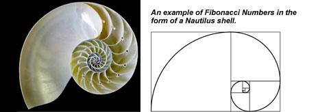 Golden Ratio Nautilus