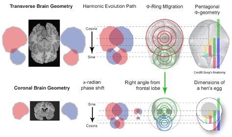 Transverse Brain Geometry