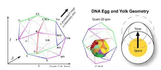 Yang's 'Vector-in-Space' DNA model