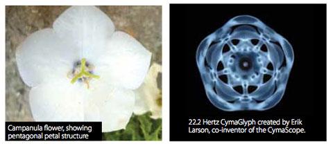 Cymatic Campanula