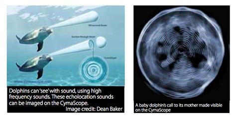 Cymatics Dolphin