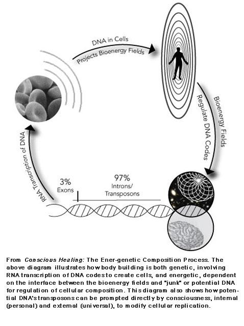 Energenetic Composition
