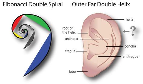 Fibonacci Ear