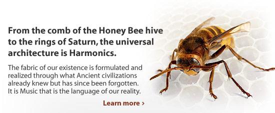 Harmonic Bee