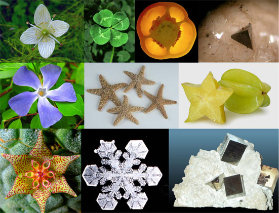Harmonics Patterns In Nature