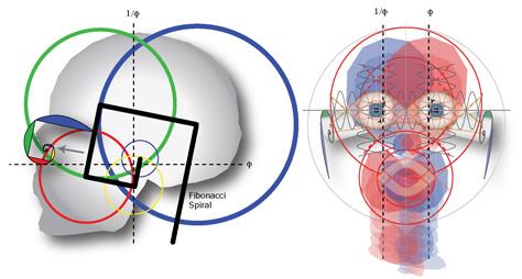 human head fibonacci